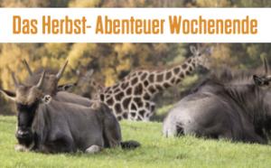 Das Herbst-Abenteuerwochenenende im Serengeti-Park