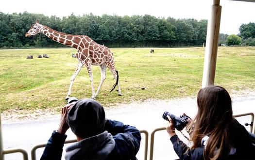 Auf Foto-Safari im Serengeti-Park
