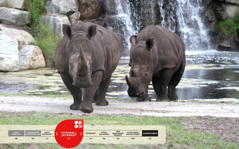 Tiere im Serengeti-Park: Breitmaulnashorn
