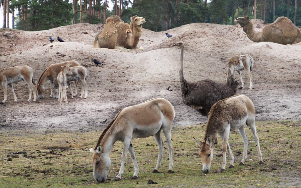 Neue Wüstenanlage im Serengeti-Park