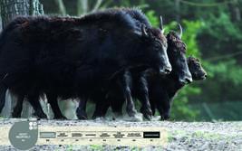 Wildtiere im Serengeti-Park: Hausyak