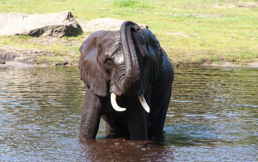 Elefant - Wildtiere Serengeti-Park