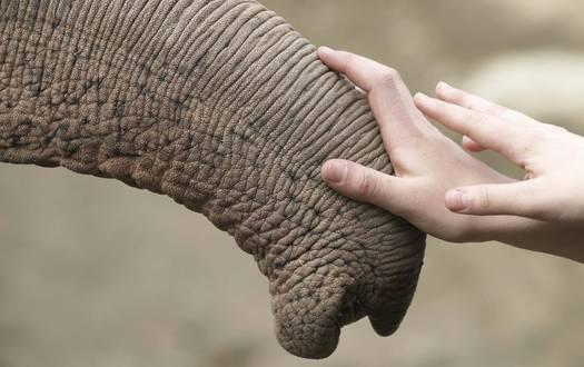 Kontakt Serengeti-Park