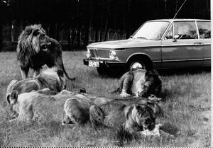 Serengeti-Park Safari 1975