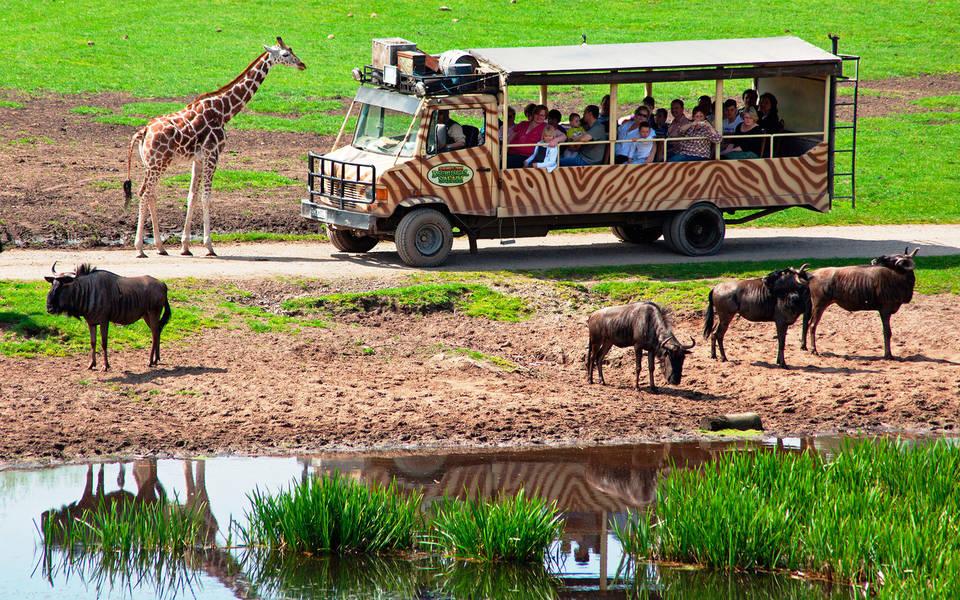Safari-Abenteuer Serengeti-Park Hodenhagen