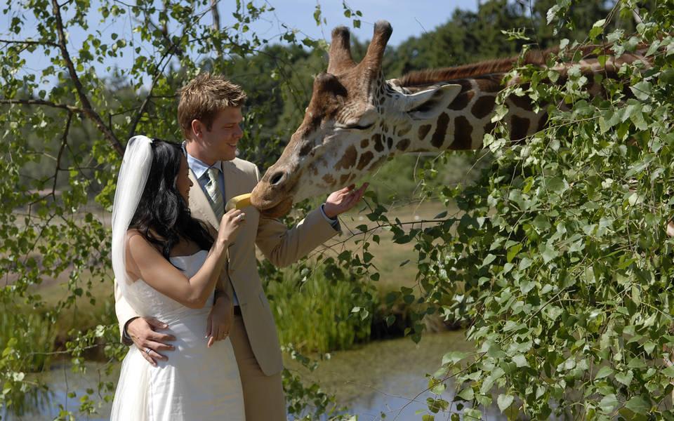 Hochzeit - Serengeti-Park