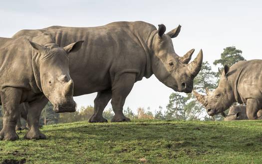 Tag als Tierpfleger im Serengeti-Park