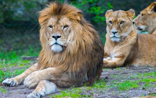 Dein Tag als Raubtierpfleger im Serengeti-Park