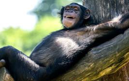 Dein Tag als Affenpfleger im Serengeti-Park