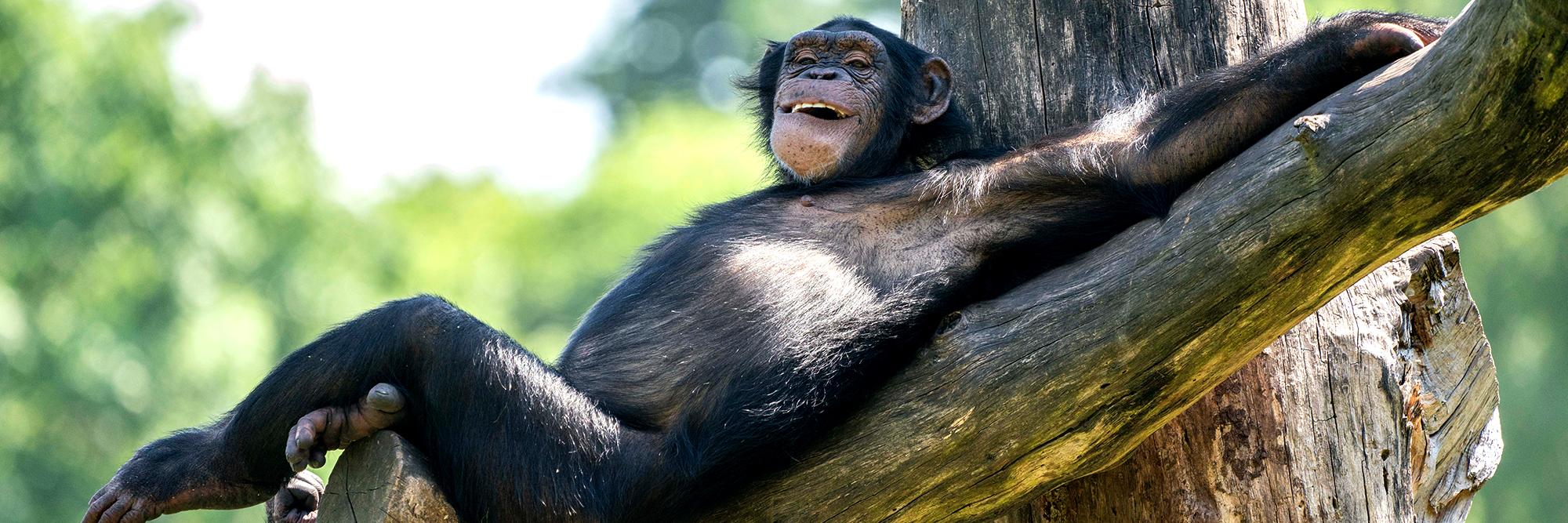 Dein Tag Als Affenpfleger