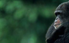 Ein Tag als Affenpfleger im Serengeti-Park Hodenhagen