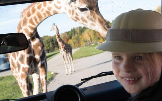 Serengeti-Safari im Serengeti-Park-Hodenhagen