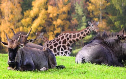 Herbst-Abenteuerwochenende im Serengeti-Park