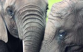 Ein Leben lang lernen - Erwachsenenführung im Serengeti-Park