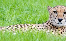 Entdecke Dein Totem-Tier im Serengeti-Park