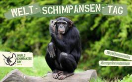 Welt-Schimpansen-Tag am 14. Juli 2018