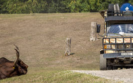 Die VIP-Jeep-Safari im Serengeti-Park