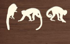 Südamerikanischer Dschungel im Serengeti-Park