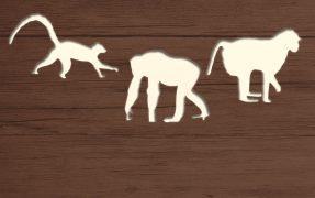 Afrikanischer Dschungel im Serengeti-Park
