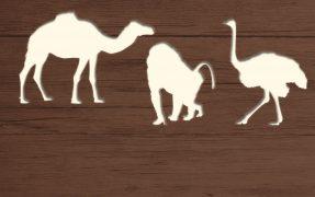 Das Wild-Areal Nordafrika im Serengeti-Park