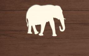 Das Wild-Areal Elfenbeintal im Serengeti-Park