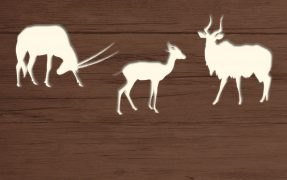 Das Wild-Areal Westafrika im Serengeti-Park