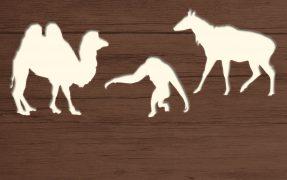 Das Wild-Areal Asien im Serengeti-Park