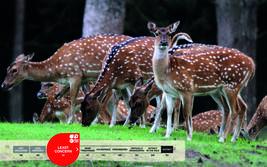 Serengeti-Park animals: Spotted deer