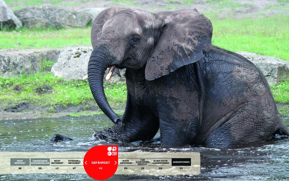 Wildtiere im Serengeti-Park: Afrikanischer Elefant