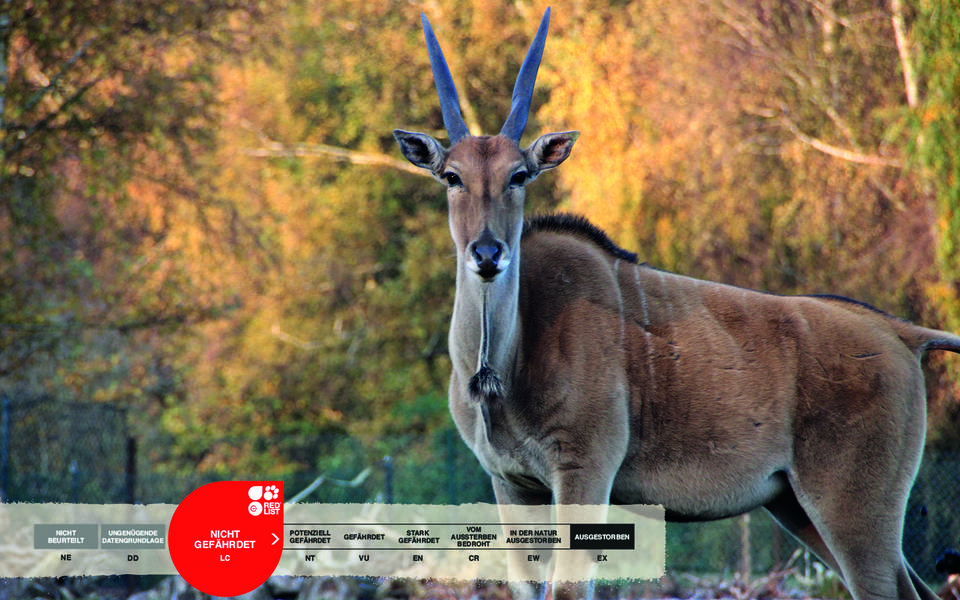Wildtiere im Serengeti-Park: Elenantilope