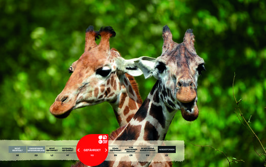 Wildtiere im Serengeti-Park: Giraffe