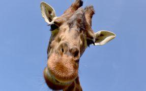 Wilde Tiere hautnah im Serengeti-Park Hodenhagen