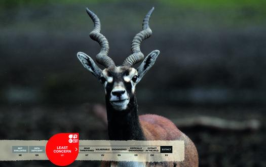 Serengeti-Park animals: Blackbuck