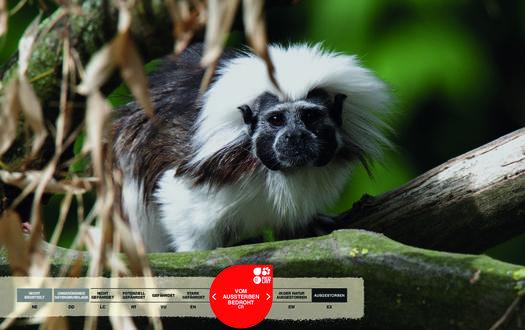 Wildtiere im Serengeti-Park: Lisztaffen