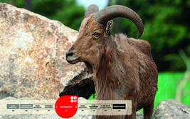 Wildtiere im Serengeti-Park: Mähnenspringer