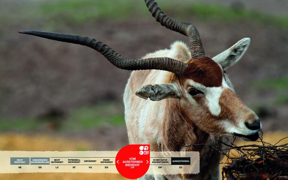 Wildtiere im Serengeti-Park: Mendesantilope