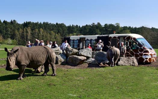 Mit dem Safari-Express auf exklusiver Tour durch den Serengeti-Park