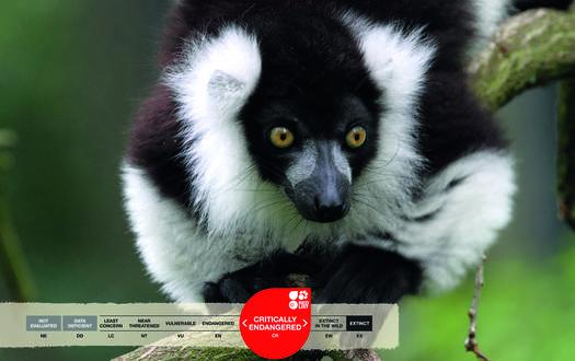 Serengeti-Park animals: Vari