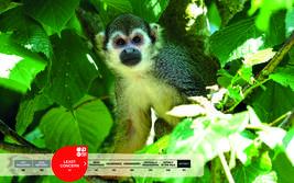 Serengeti-Park animals: Squirrel monkey