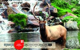 Serengeti-Park animals: Western Red Deer
