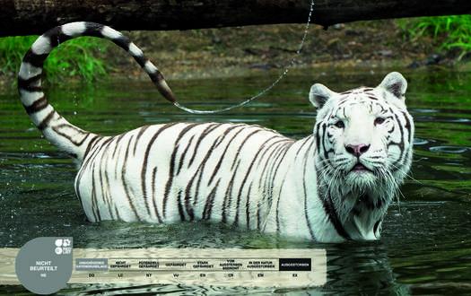 Das Wild Areal Asien Weiße Tiger Serengeti Park