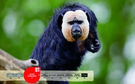 Serengeti-Park animals: White faced saki