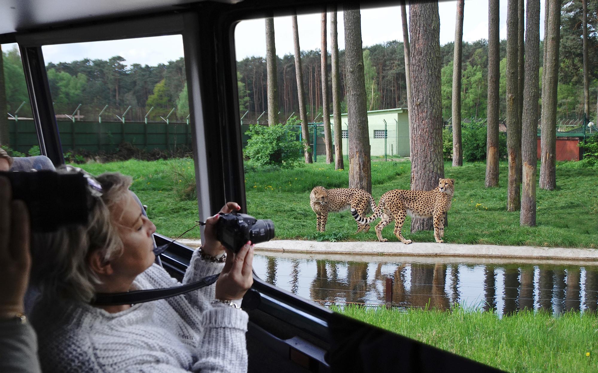 Elite-Safari mit exklusiven Blicken hinter die Kulissen
