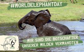 Welt-Elefanten-Tag im Serengeti-Park