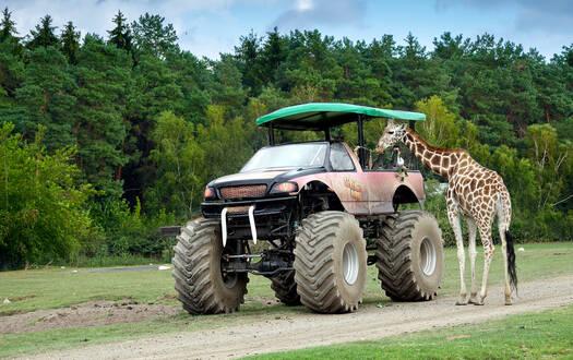 VIP-Big-Foot-Safari im Serengeti-Park
