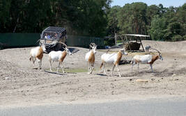 VIP-Quad-Safari im Serengeti-Park