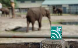 Infraschall-Test mit Elefanten