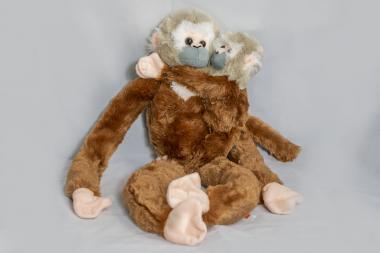 Hänge-Langur mit Baby