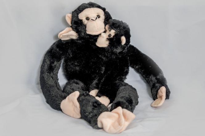 Hänge-Schimpanse mit Baby